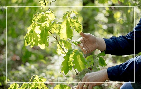 White Oak Sustainability
